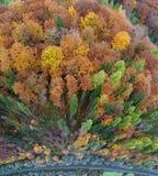 Vista aerea della foresta carpatica in autunno Fotografia Stock