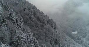 Vista aerea della foresta con neve nella montagna archivi video