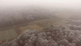 Vista aerea della foresta congelata stock footage