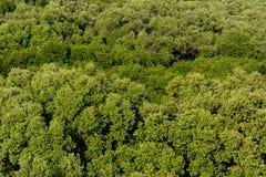 Vista aerea della foresta della mangrovia Fotografia Stock Libera da Diritti