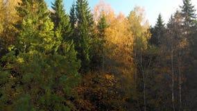 Vista aerea della foresta di autunno con gli alberi verdi e gialli video d archivio