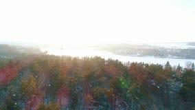Vista aerea della foresta di inverno video d archivio
