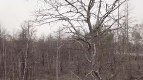 Vista aerea della foresta dopo un fuoco archivi video