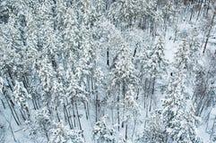Vista aerea della foresta di inverno immagine stock