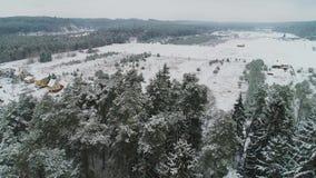 Vista aerea della foresta nevosa di inverno archivi video