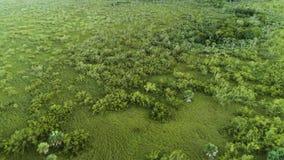 Vista aerea della foresta pluviale verde tropicale vicino al campo da golf in Punta Cana, Repubblica dominicana archivi video