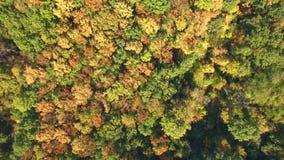 Vista aerea della foresta variopinta di autunno sulle colline video d archivio