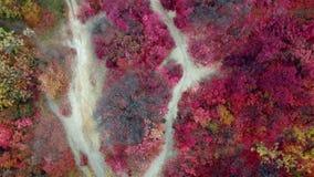 Vista aerea della foresta variopinta di autunno sulle colline stock footage