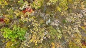 Vista aerea della foresta variopinta di autunno sulle colline archivi video