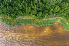 Vista aerea della linea costiera al giorno di estate Lago e foresta Immagini Stock Libere da Diritti