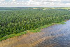 Vista aerea della linea costiera al giorno di estate Lago e foresta Immagine Stock