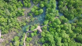Vista aerea della mangrovia Forest Top View di PA Phru Tha Pom Khlong Song Nam Park in Krabi, Tailandia video d archivio