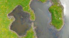 Vista aerea della palude archivi video