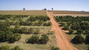 Vista aerea della piantagione degli aranci Fotografia Stock Libera da Diritti