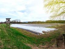 Vista aerea della piantagione dell'asparago in primavera Fotografie Stock