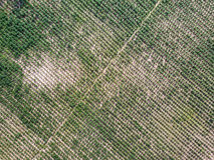 Vista aerea della piantagione della manioca Fotografie Stock Libere da Diritti