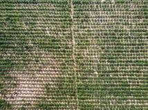 Vista aerea della piantagione della manioca Fotografie Stock