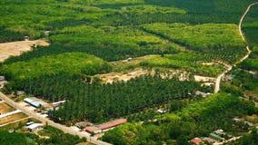 Vista aerea della piantagione delle palme per zucchero video d archivio