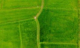 Vista aerea della risaia fotografie stock libere da diritti
