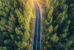 Vista aerea della strada nella bella foresta della molla al tramonto fotografia stock libera da diritti
