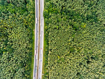 Vista aerea della strada principale, ingorgo stradale, foresta verde, Paesi Bassi Fotografia Stock Libera da Diritti