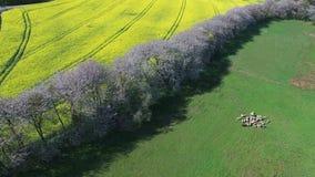 Vista aerea della Svezia del sud archivi video