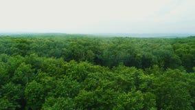 Vista aerea della transizione senza cuciture dal campo verde puro nella foresta e nelle montagne dense 4K archivi video