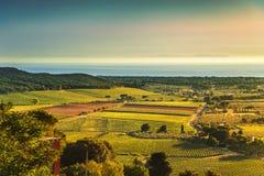 Vista aerea della vigna di Castagneto e di Bolgheri sul tramonto Maremma Fotografia Stock