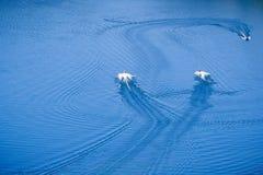 Vista aerea delle barche nel lago del sud Berryessa, Napa Valley, California immagine stock