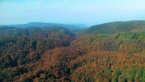 Vista aerea delle cime d'albero di una foresta in autunno archivi video