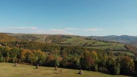 Vista aerea delle montagne carpatiche in autunno Rivolti il fieno la raccolta video d archivio