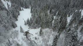 Vista aerea delle montagne di inverno coperte di pini Volo basso sopra bellezza attillata nevosa della foresta di fauna selvatica archivi video
