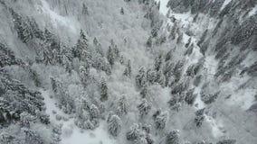 Vista aerea delle montagne di inverno coperte di pini Volo basso sopra la foresta attillata nevosa archivi video