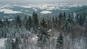 Vista aerea delle montagne di inverno, prato alpino Colline coperte di pini enormi e di picchi innevati sull'orizzonte video d archivio