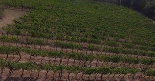 Vista aerea delle vigne stock footage