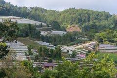 Vista aerea di agricoltura della serra e di agricoltura Chiang Mai Immagine Stock Libera da Diritti