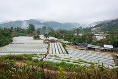 Vista aerea di agricoltura della serra e di agricoltura Chiang Mai Fotografia Stock