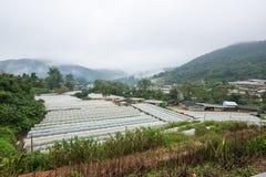 Vista aerea di agricoltura della serra e di agricoltura Chiang Mai Immagini Stock Libere da Diritti