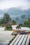 Vista aerea di agricoltura della serra e di agricoltura Chiang Mai Fotografia Stock Libera da Diritti