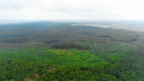 Vista aerea di muoversi in avanti verso la foresta di legni e la valle della montagna con foschia alta nel cielo 4K stock footage
