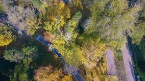 Vista aerea di paesaggio autunnale della natura nel parco della città archivi video