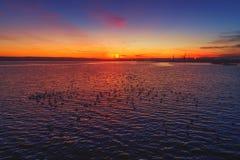 Vista aerea di piccole anatre che nuotano nel mare Colpo di tramonto Fotografie Stock