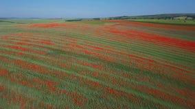 Vista aerea di Poppy Hills in Moravia, repubblica Ceca stock footage