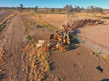 Vista aerea di raduno del bestiame di entroterra Fotografia Stock Libera da Diritti