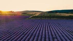 Vista aerea di tramonto sopra i fileds agricoli nella campagna Piante del grano e della lavanda video d archivio