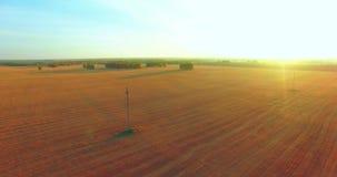 Vista aerea di UHD 4K Volo mezz'aria sopra il giacimento rurale del grano giallo stock footage