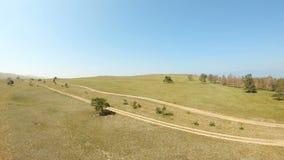 Vista aerea di un albero solo nel campo archivi video