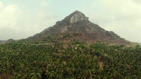 Vista aerea di un'azienda agricola della noce di cocco con il Mountain View nei precedenti video d archivio