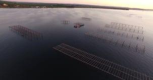 Vista aerea di un campo dell'ostrica nel sud della Francia video d archivio