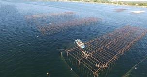 Vista aerea di un campo dell'ostrica nel sud della Francia stock footage